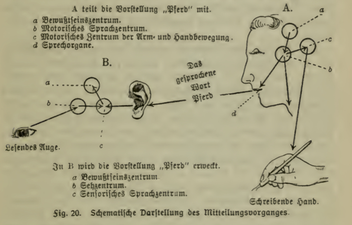 A diagram with a sketch of a woman's head, an arrow pointing from her brain to a hand holding a pencil, and another arrow exiting her mouth and pointing to a sketch of an ear